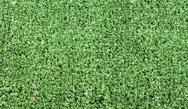 Artificial Grass - Kindy Turf 2